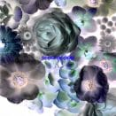 Alpines - Slow Bloom – Поп замедленного течения